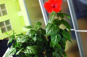 Декоративные растения для квартиры