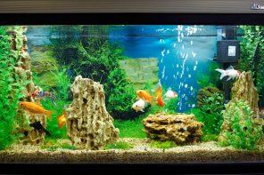 Заводим рыбок в аквариуме